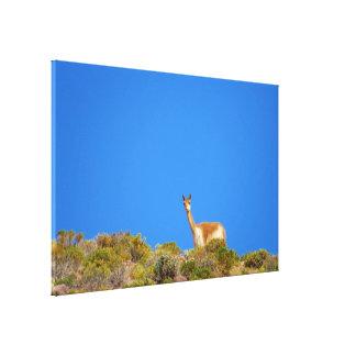 vicuñaの青 キャンバスプリント