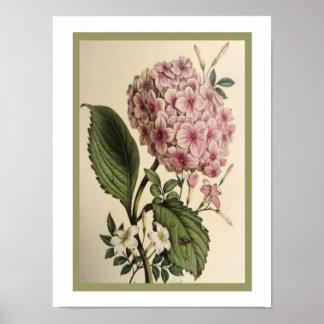 Vintage Botanical Hydrangea Print 12 x 16 ポスター