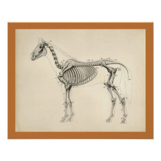 Vintage Horse Veterinary Skeletal Anatomy Print ポスター