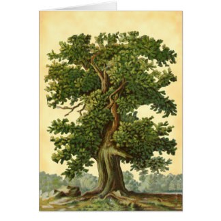 Vintage Oak Tree Faux Parchment Blank Art Card カード