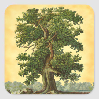 Vintage Oak Tree on Faux Parchment Stickers スクエアシール
