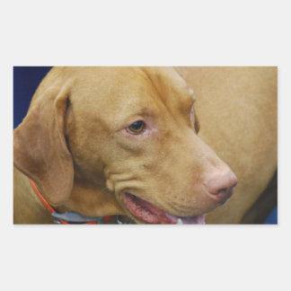 Vizslaかわいい犬 長方形シール