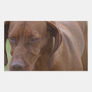 Vizsla素晴らしい犬 長方形シール