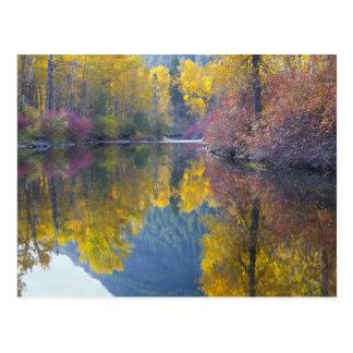 WAのWenatcheeの国有林、Whitepineの入り江、 ポストカード