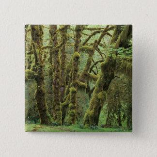 WA、オリンピックNPのHohの熱帯雨林、ホールの 5.1cm 正方形バッジ
