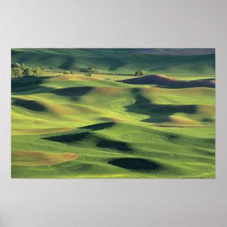 WA、Whitman郡のPalouseの農地、眺め ポスター