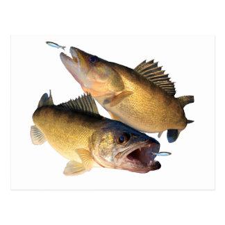 Walleyeの魚釣り ポストカード