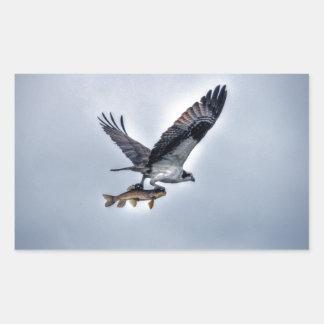 Walleyeの魚HDRの写真を持つ飛んでいるなミサゴ 長方形シール