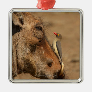 warthogsの鼻のOxpecker、Isimangaliso、 メタルオーナメント