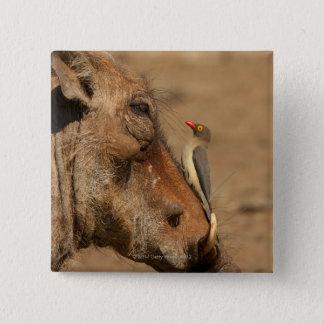warthogsの鼻のOxpecker、Isimangaliso、 5.1cm 正方形バッジ