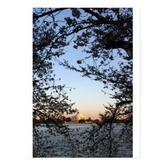 Washington D.C.の桜 ポストカード
