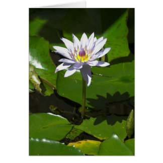 Waterlilly カード
