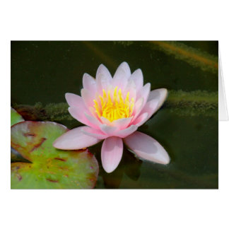 """""""Waterlilly """" カード"""
