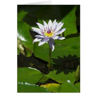Waterlilly グリーティングカード