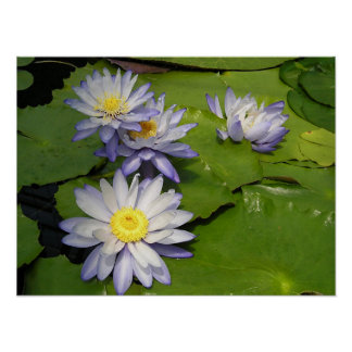waterlilly プリント