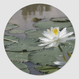 Waterlilly 丸形シールステッカー