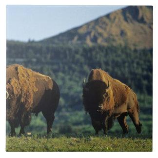 Waterton湖の国立公園のバイソンの雄牛 タイル