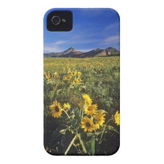 Waterton 2のArrowleafのbalsomrootの野生の花 Case-Mate iPhone 4 ケース