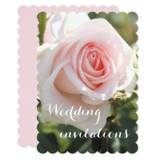 Wedding invitations:Rosa Bridal Pink Card