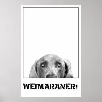 Weimaranerの国家: 箱のWeimaraner! ポスター