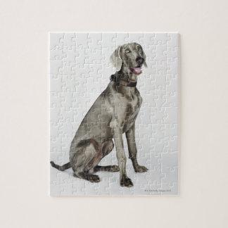 Weimaraner犬のポートレート ジグソーパズル