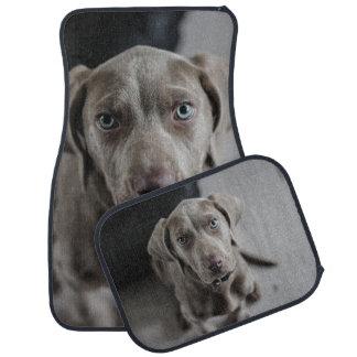 Weimaraner犬の品種恋人 カーマット