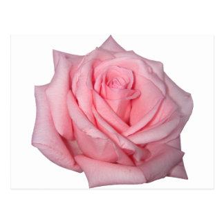 Wellcodaのピンクのバラのロマンチックなフラワーパワー ポストカード