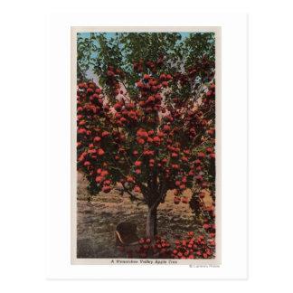 WenatcheeのWAA Wenatcheeの谷のりんごの木 ポストカード