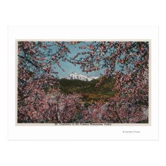 Wenatchee、木が付いているMt.のカシミヤ織のWAView ポストカード