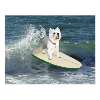 Westieのサーファー ポストカード