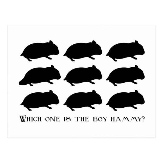 Which one is the boy hammy? post card ポストカード