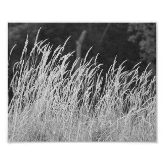 Whispyの流れ10 x 8写真の印画 フォトプリント