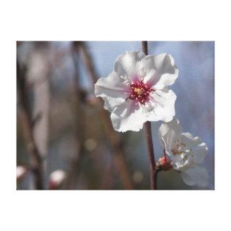 White flower in natural light キャンバスプリント