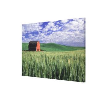 Whitmanのムギ及びオオムギ分野の赤い納屋 キャンバスプリント