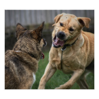WHOは犬のwofのwofのwofのwofを許可しました ポスター