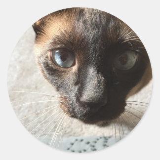 whutを言って下さいか。 シャム猫 ラウンドシール