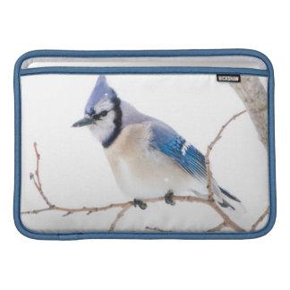 Wichita郡、テキサス州。 青いJay5 MacBook スリーブ