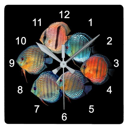Wild Discus fish スクエア壁時計