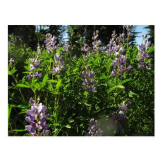 Willametteの荒野のルピナス属の花 ポストカード