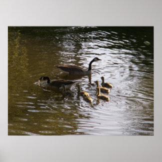 winfield湖のカナダのガチョウ家族 ポスター