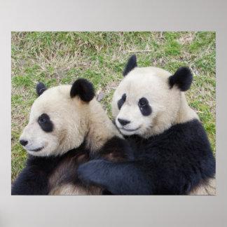 Wolongの予備、中国、ジャイアントパンダの抱き締めること ポスター