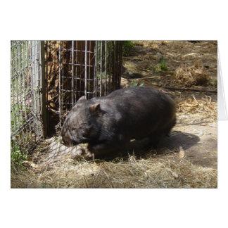 Wombatsのために野生 カード