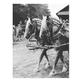 Working Draft Horses in Black and White ポストカード