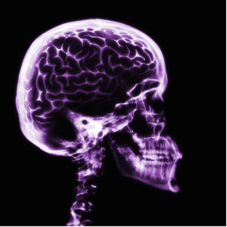 X線のスカルの頭脳-紫色 写真彫刻(台付き)