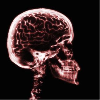 X線のスカルの頭脳-赤 写真彫刻(台付き)
