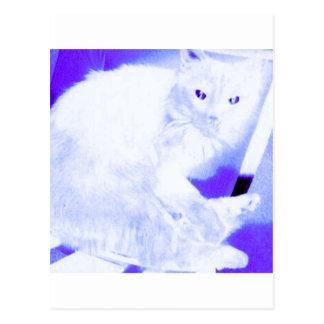 X線の子猫 ポストカード