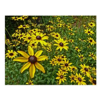 XX黄色いデイジーの花の芸術の写真撮影 ポストカード