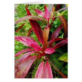 Yelapaの植物 カード