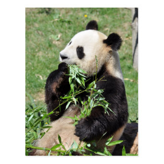 Yumタケ! パンダの郵便はがき ポストカード