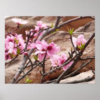 Zionの赤の石の春の花 ポスター